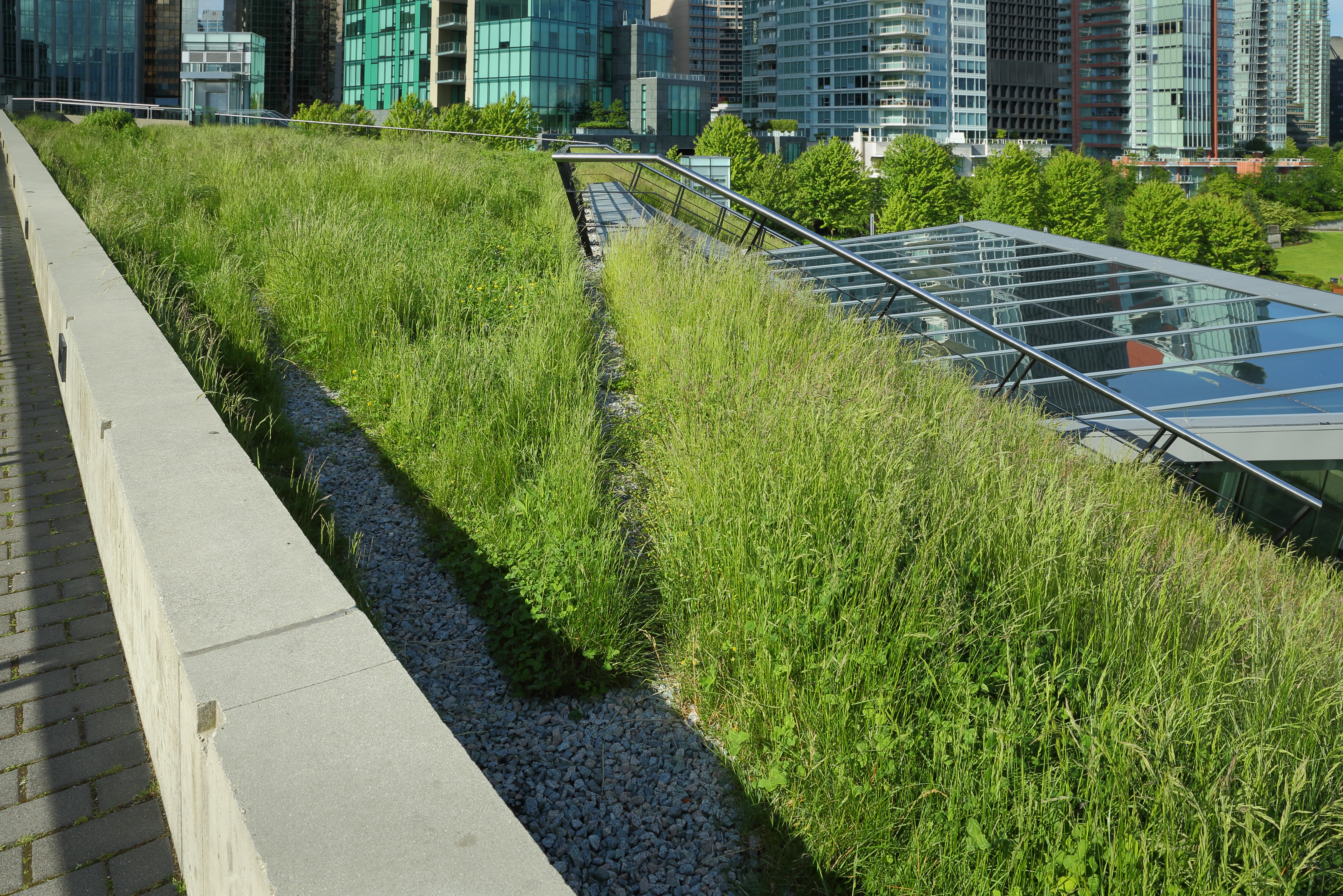 Grass Growing on a Green Roof