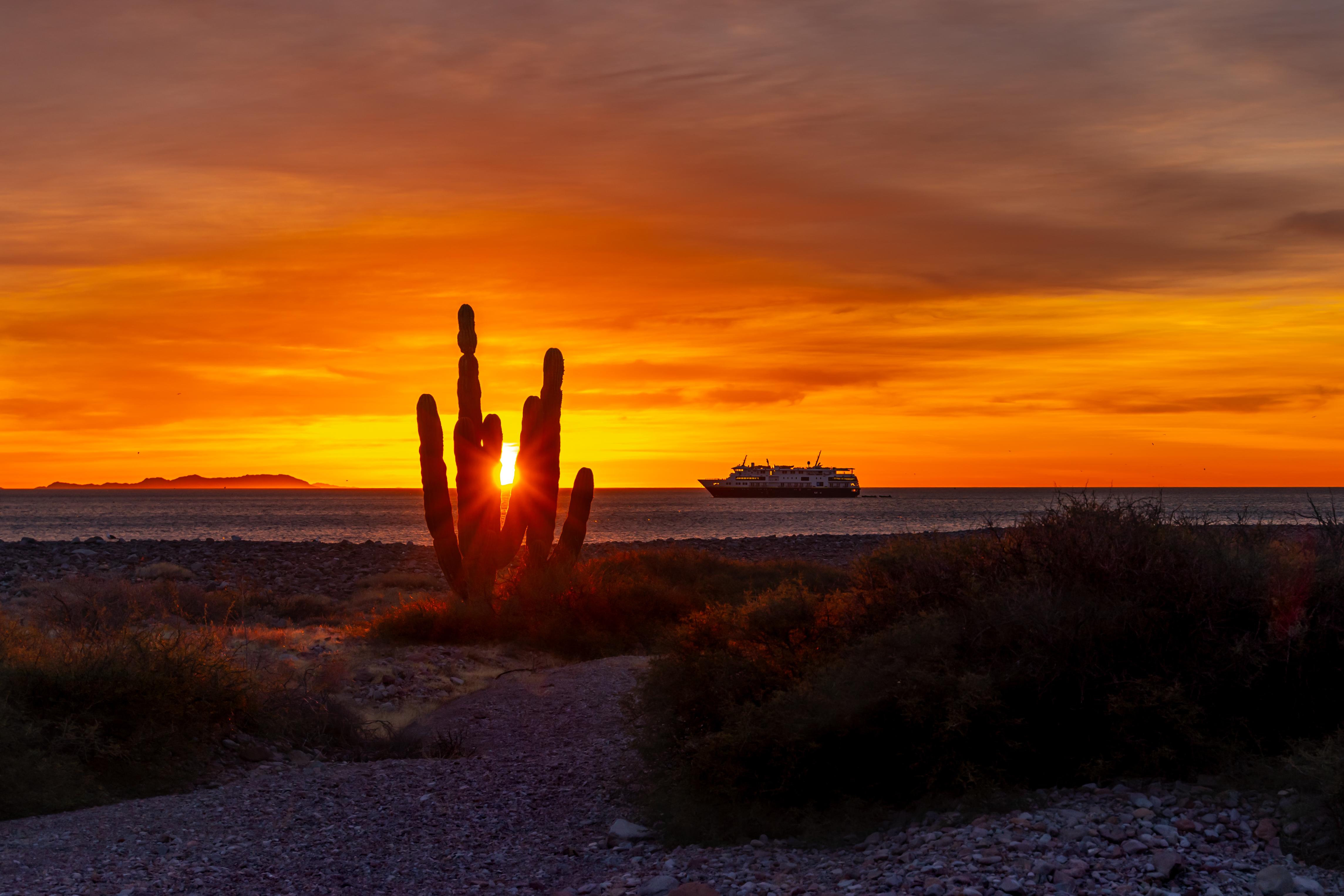 The sun peaks through a cardon cactus at sunrise