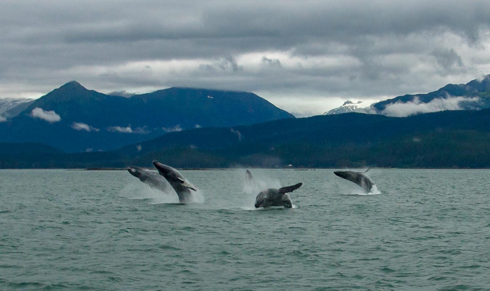 Jill Niederberger Whales.jpg