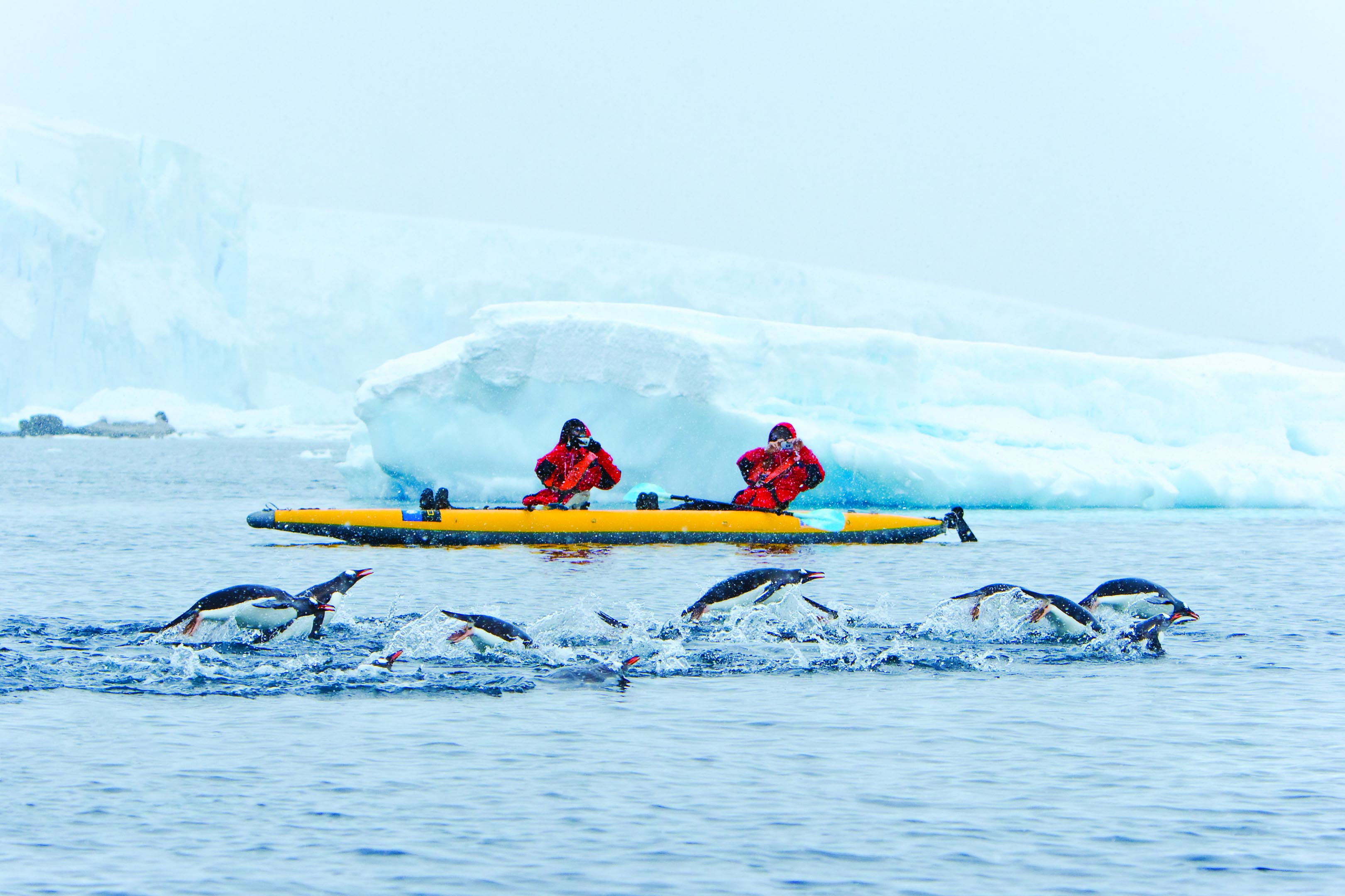 Anta kayaking with penguins.jpg