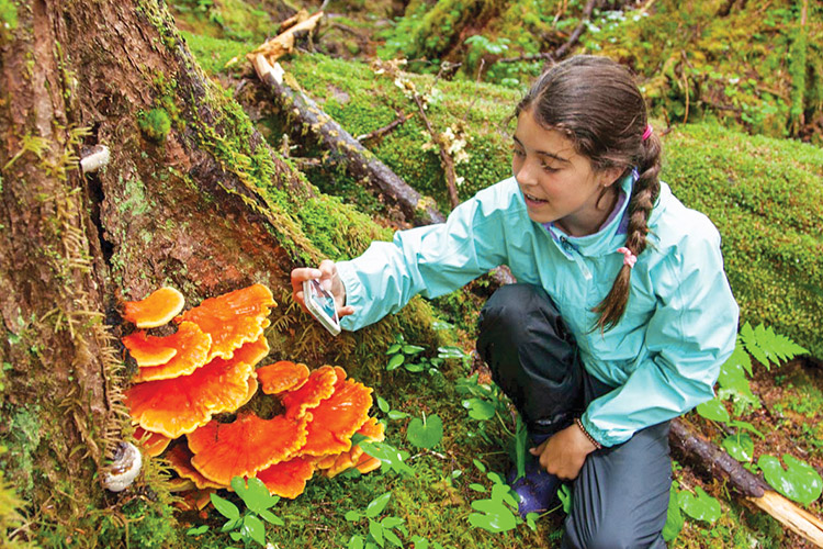 mushroom video.jpg