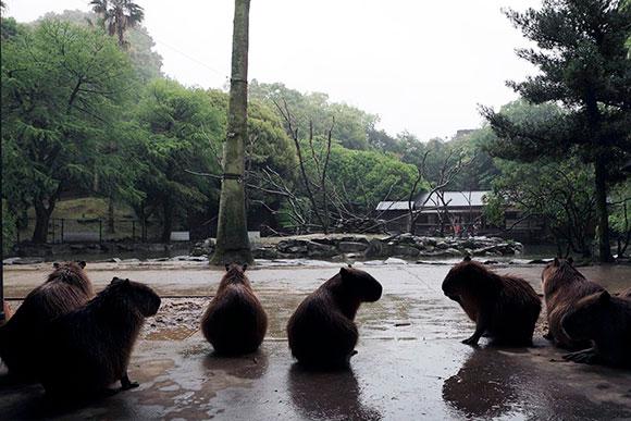 雨をみて何を考えているのでしょう