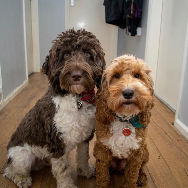 Sarah dogs 2.jpg