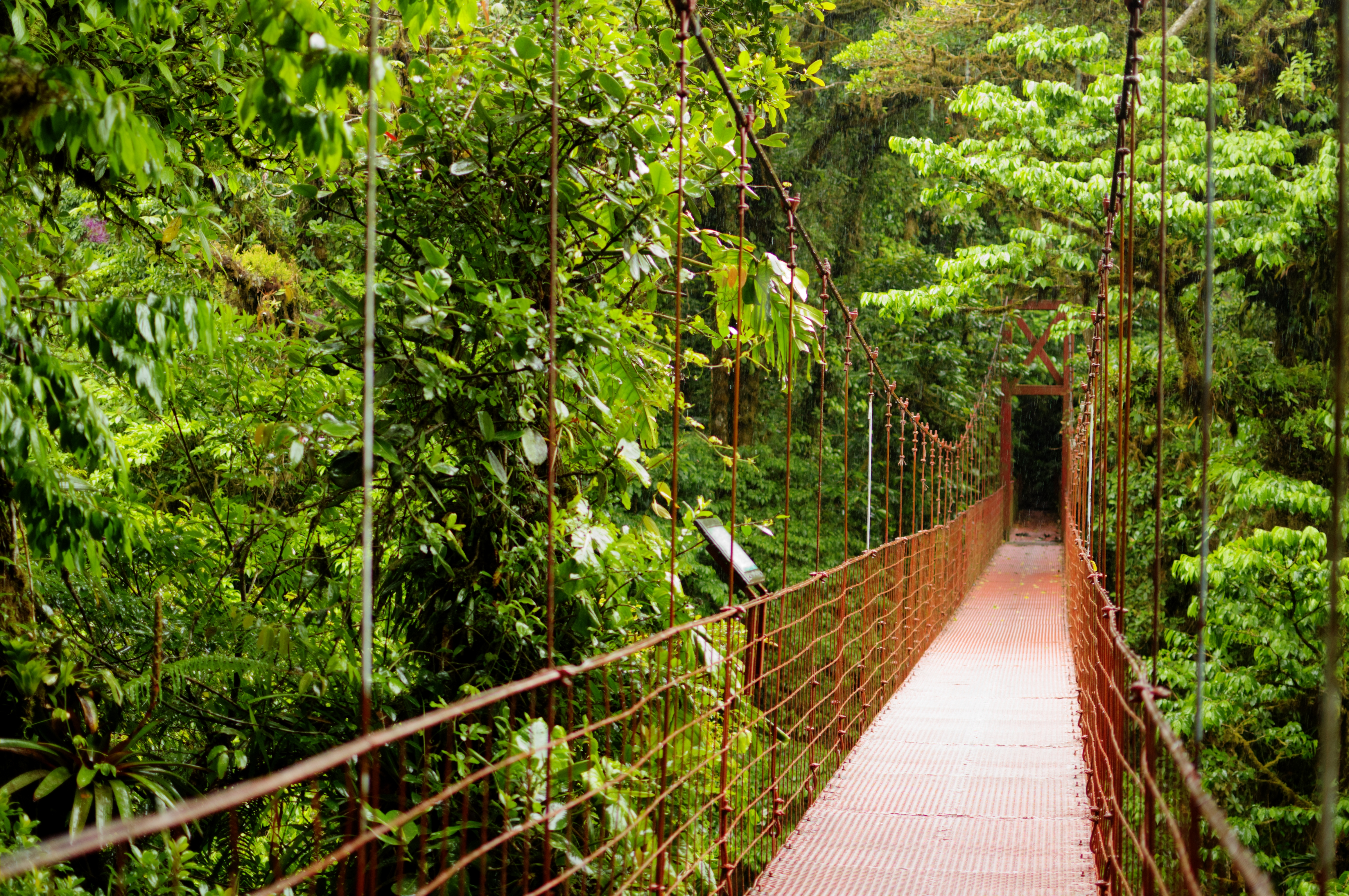 A wooden bridge in a forest of Monteverde