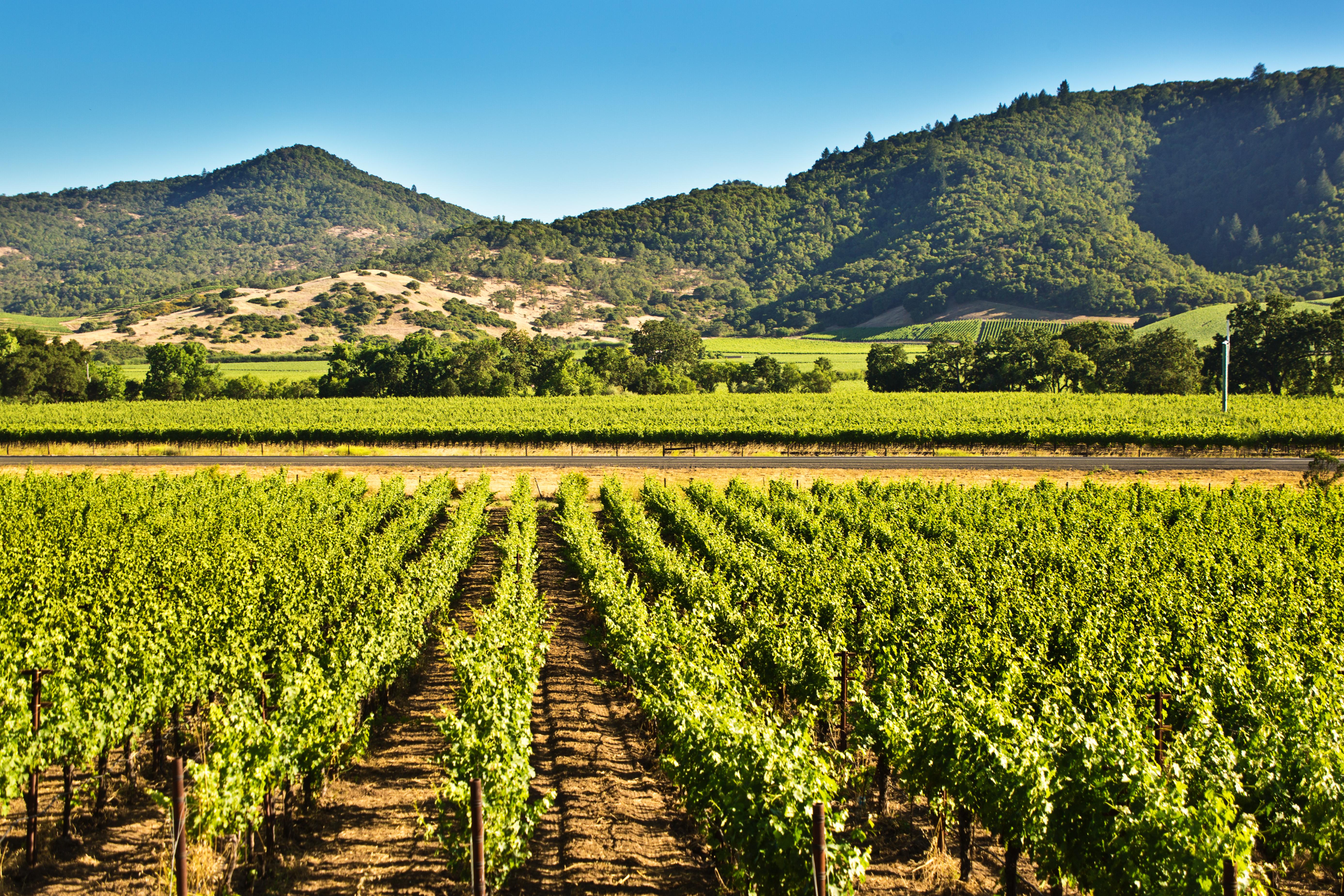 Napa Valley California Vineyard and Winery