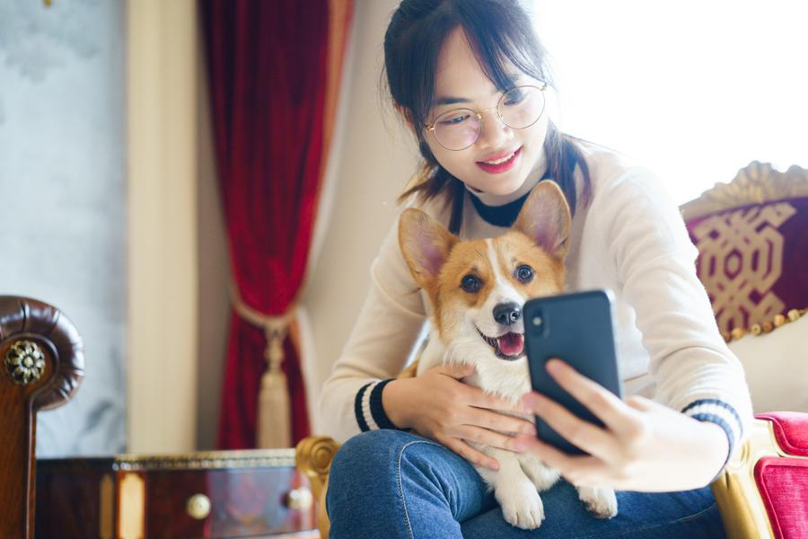 Virtual vets are raking in funding—is pet telehealth the next big thing?