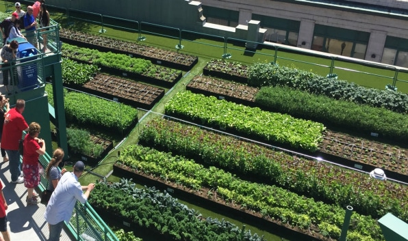 i-1-90413645-why-donand8217t-all-buildings-have-green-roofs.jpg