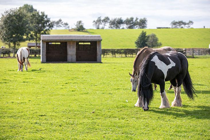 PF_Horses_080919-51.jpg