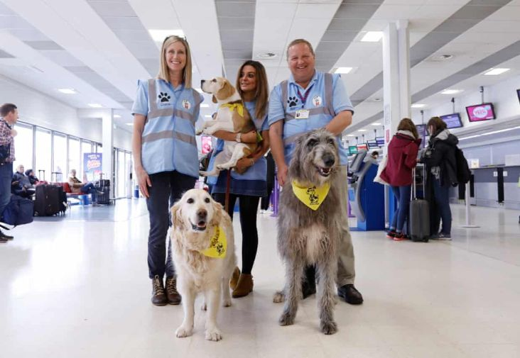 Therapy dogs at Aberdeen Airport