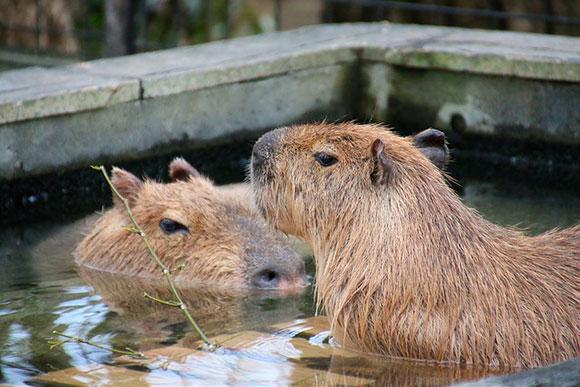 お風呂も一緒