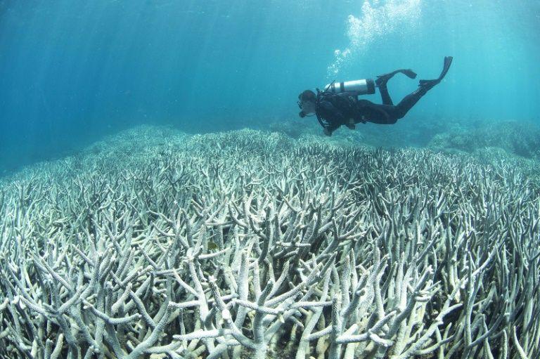 bleached coral reef.jpg