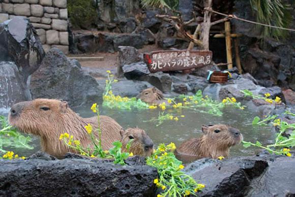 菜の花湯(伊豆シャボテン公園)