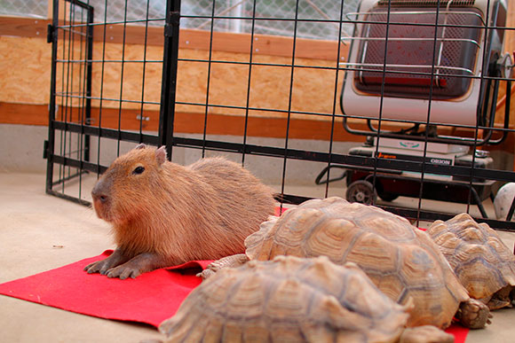 トリアスの素晴らしいところは、いろいろな動物が放し飼いされていることです。