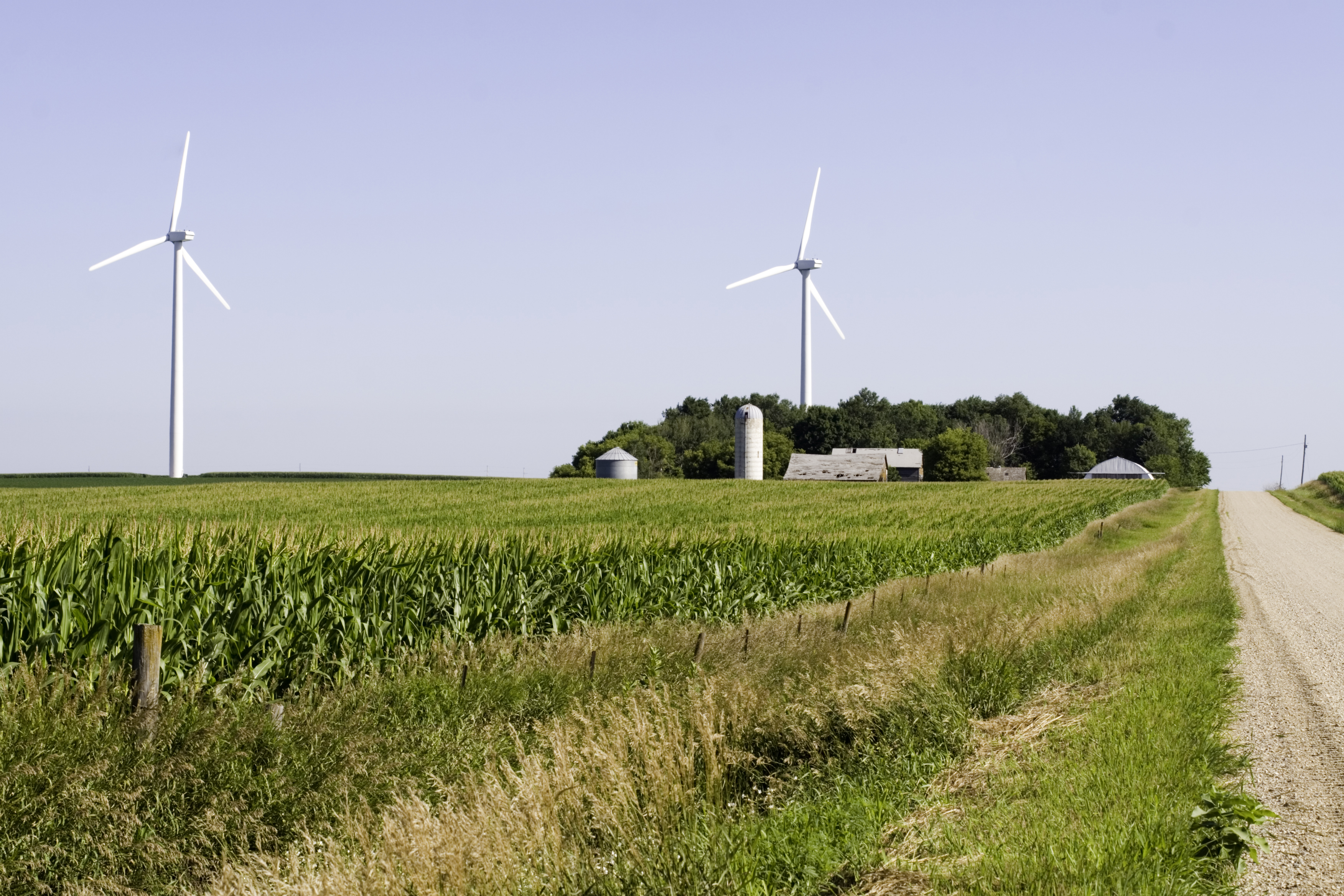 Windmills and Cornfield in Rural Iowa