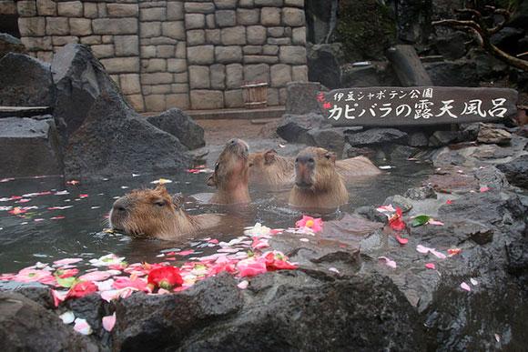 色とりどりの春の花風呂です。