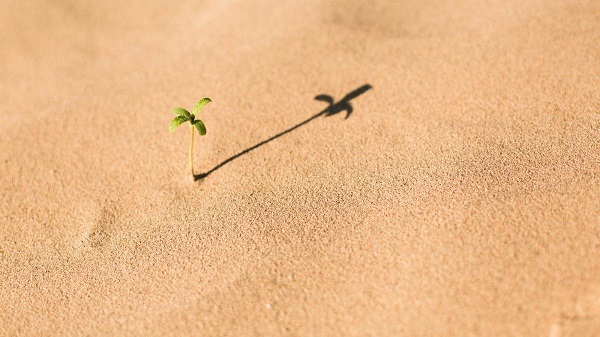Small seedling growing in sand with shadow