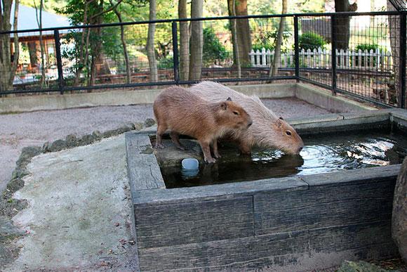 お水を飲むときも一緒