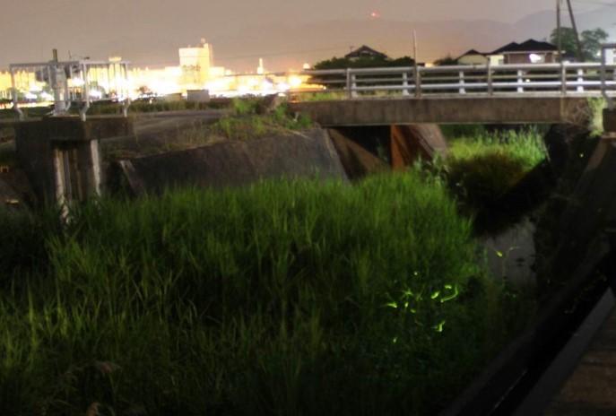 北鼻川に舞うホタル(左奥はジャパンセミコンダクター大分事業所)