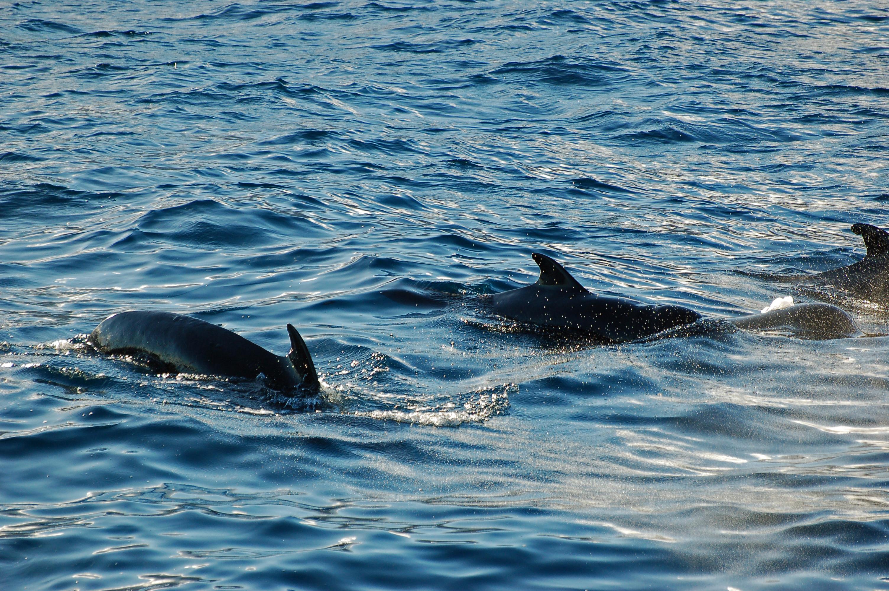 richard piliot whales.jpg