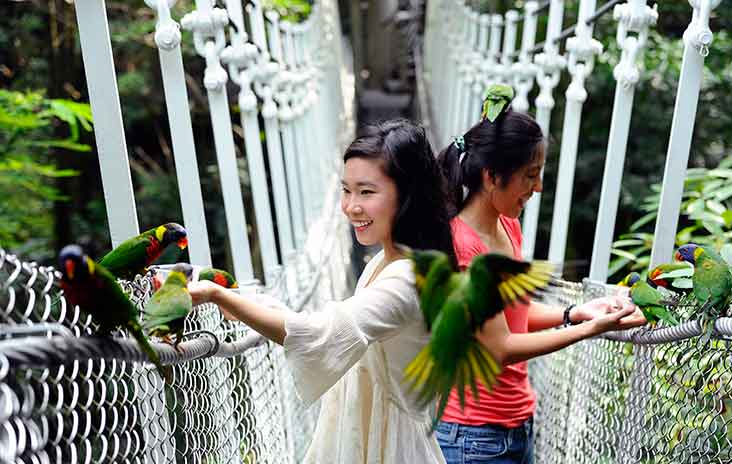 Feeding the lories and lorikeets at Jurong Bird Park, Singapore