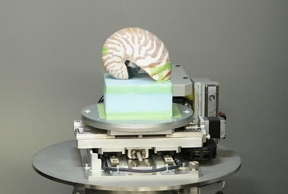 非破壊検査装置によるオウムガイの透視の様子