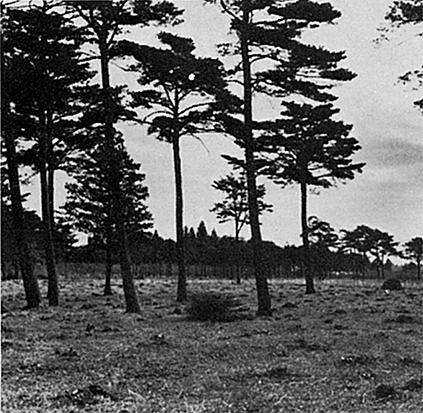 広大な雑木林であった府中事業所の工場用地