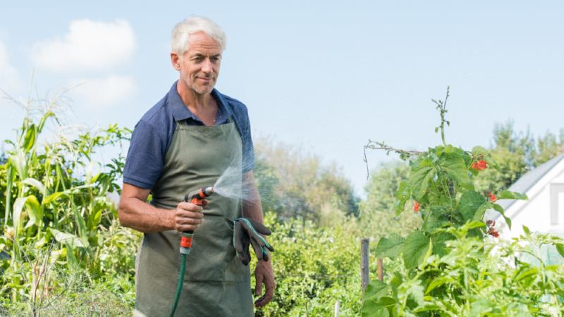 Senior man watering plants