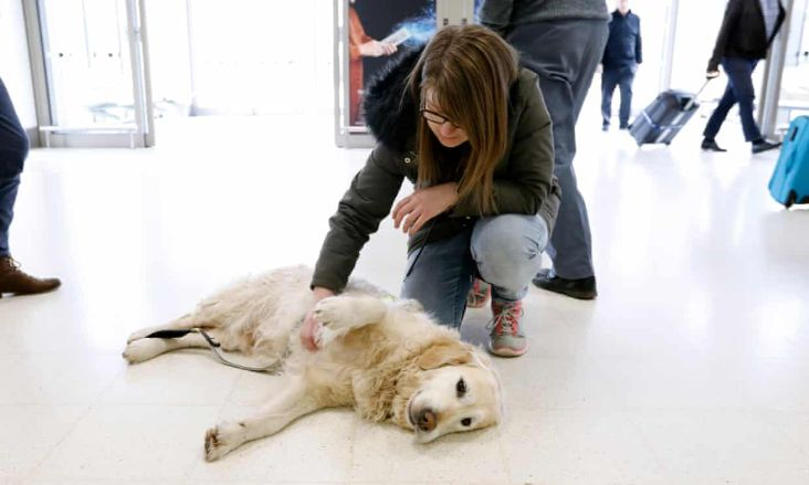 Therapy dog at Aberdeen Airport