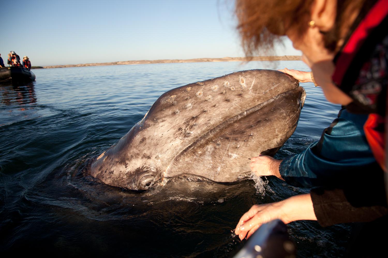 20110301_baja whale_SS.jpg