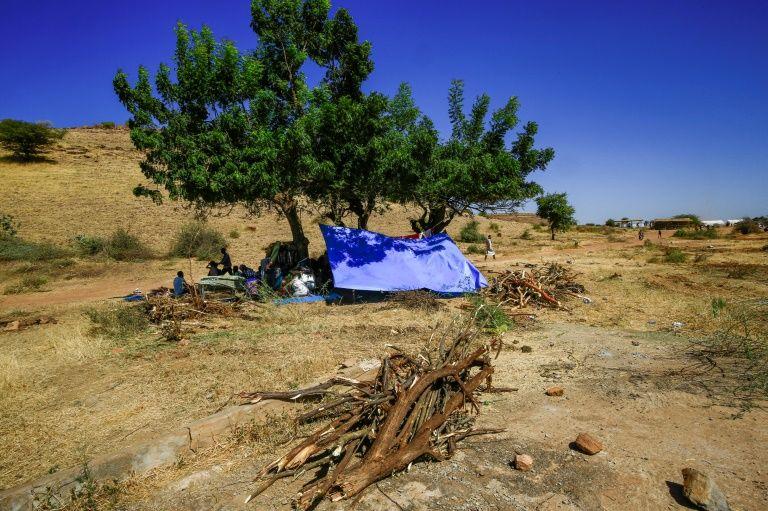 TreesBulldozed_02.jpg