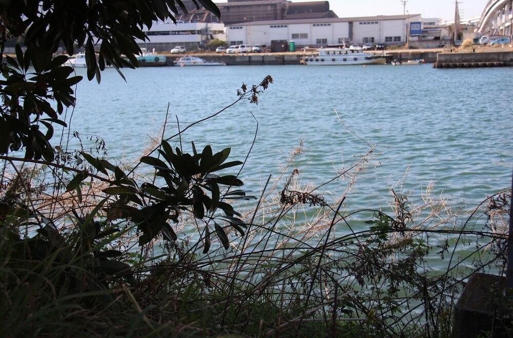 ビオトープのすぐ裏手には運河が流れており、その立地条件を改善活動に生かした