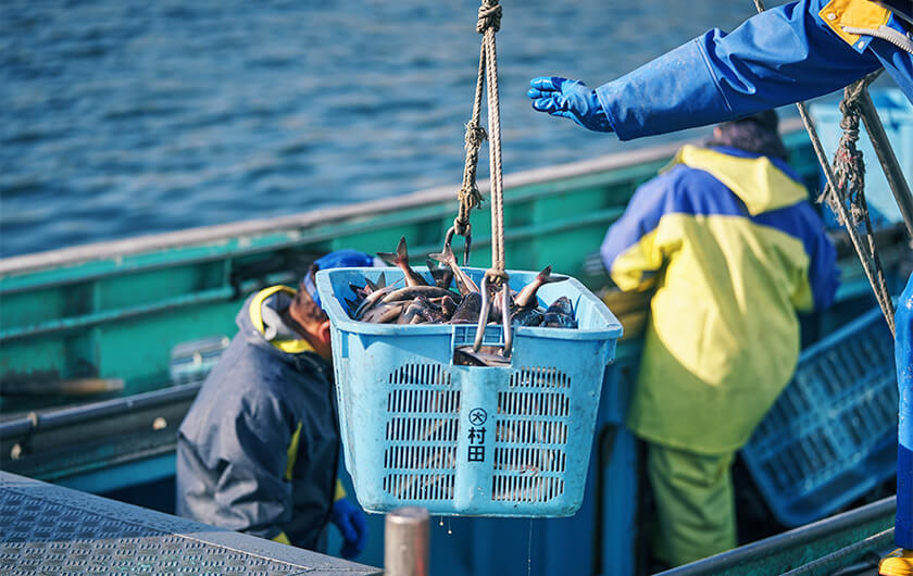 Photo : An April morning in Kamoenai Fishing Port. A variety of species, such as squid, trout, atka mackerel, and flounder are being unloaded.