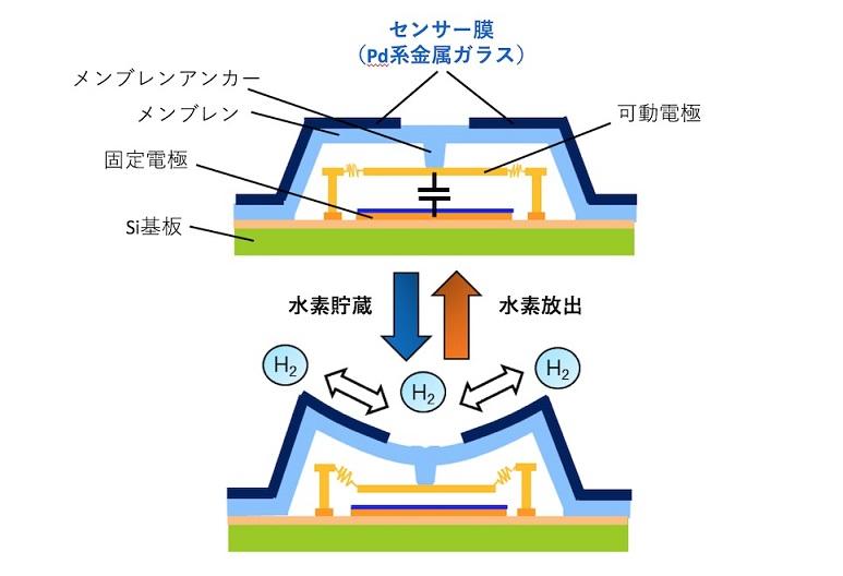 センサー膜