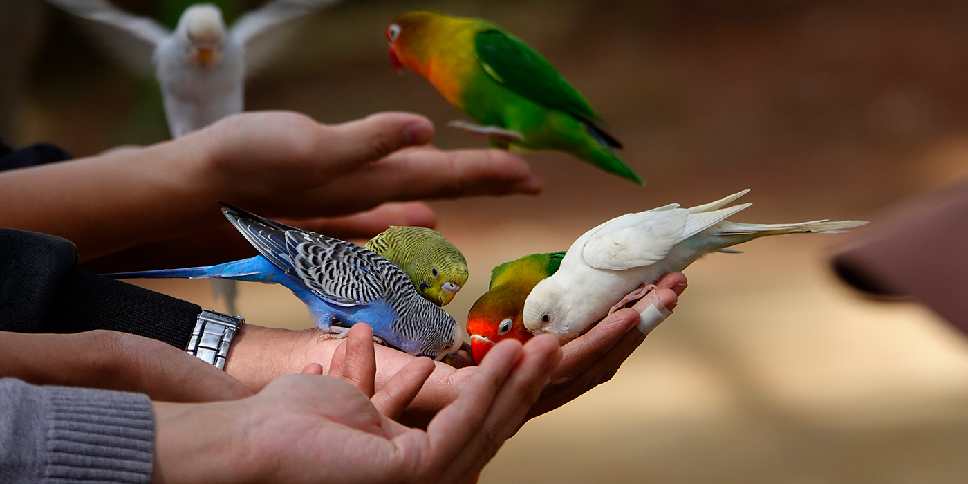 3807272---Bring-your-website-to-life-with-great-imagery-birds.jpg